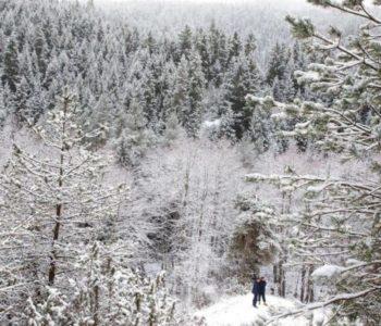 Gruzija je mjesto gdje božićno drvo košta više od mjesečne plaće