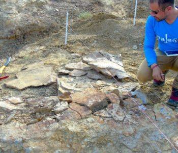 Pronađen fosil kornjače veličine automobila