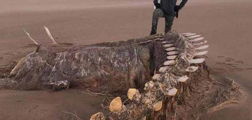 Kostur čudovišta na škotskoj obali zbunio i morske biologe