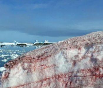 Zapanjujuće fotografije krvavo crvenog leda na Antarktiku