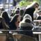 U svijetu cijene strelovito rastu, samo je u Švedskoj situacija dobra