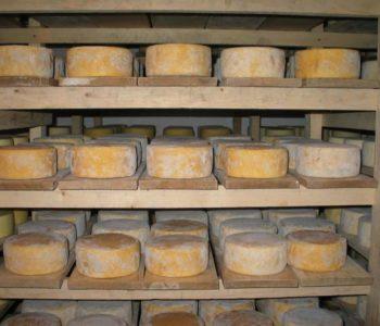 Livanjski sir bi mogao biti uskoro zaštićen