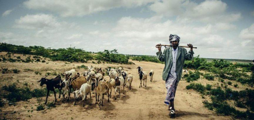 Zbog najezde skakavaca tisuće Etiopljana gladno
