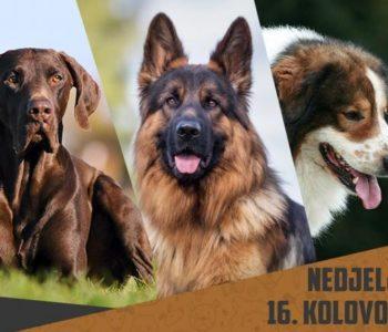 NAJAVA: Revija svih pasmina pasa u Sovićima (Grude)