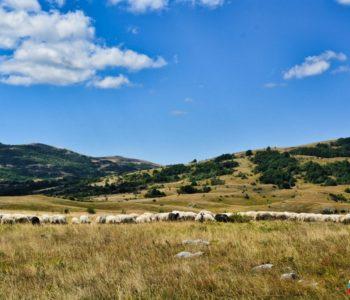 Ramska sušena ovčetina kao specijalitet