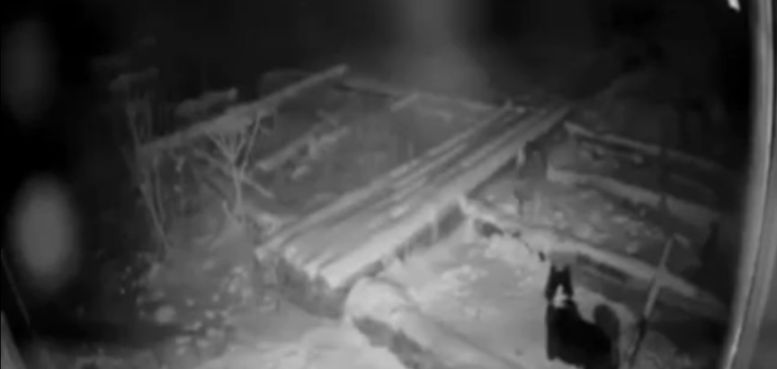 VIDEO: Vuk usmrtio pa otrgnuo psa s lanca