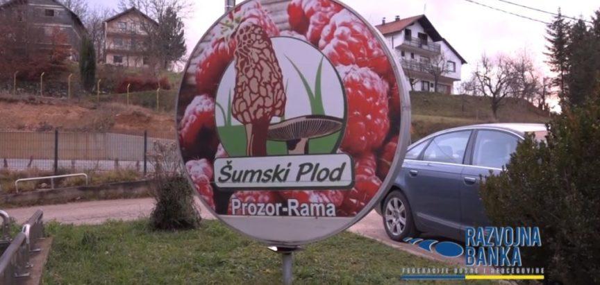 Šumski plod – Prozor Rama od male obiteljske firme do svjetskog izvoznika