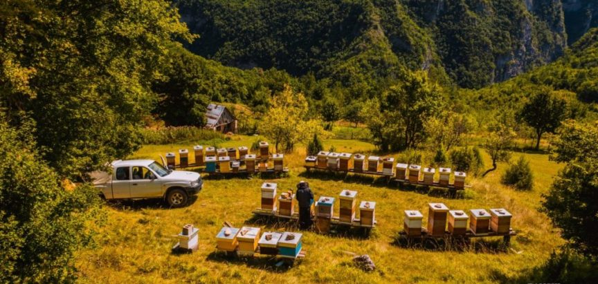 """Grad Livno potiče proizvodnju meda kroz projekt """"Održivo pčelarstvo"""" vrijedan 130.000 KM"""