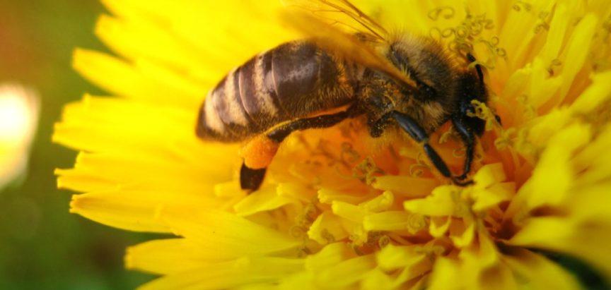 """Nizozemci grade """"hotele"""" i """"autoceste"""" za pčele kako bi ih spasili"""