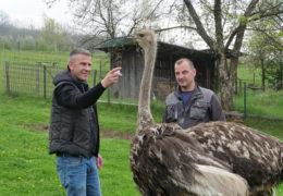 Youtuberi iz Putićeva kod Travnika koji uzgajaju nojeve