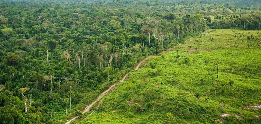 Sječa amazonske prašume veća za 51 posto