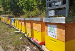 "Udruga pčelara ""Iva"" iz Posušja kroz projekt Via Dinarice dobila 20 pčelarskih SMS vaga"