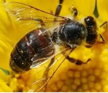 Zašto uistinu nestaju pčele?