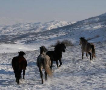 Vozači oprez: Konji na putu Šujica – Livno