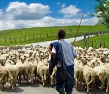 Dirljiva priča jednoga pastira