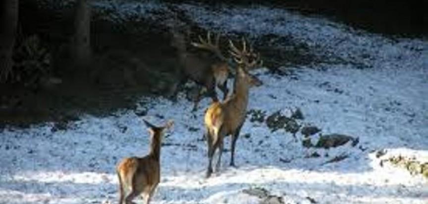 Borba za jedinstveno lovište pred Ustavnim sudom F BiH