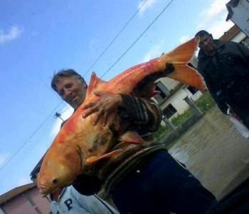 FOTO U poplavama uhvatio zlatnu 'ribetinu'!