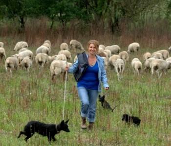 Magistra prava uživa u uzgoju 300 ovaca: Želim biti svoj gazda