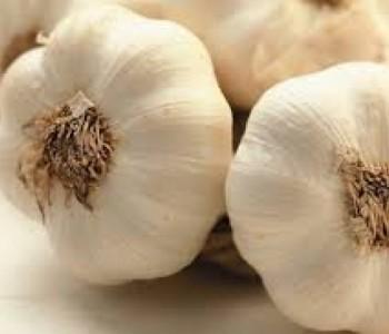 Odluka o poticanju proizvodnje češnjaka – bijelog luka