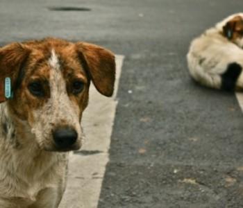 Psi otkrivaju tumor fascinantnom preciznošću