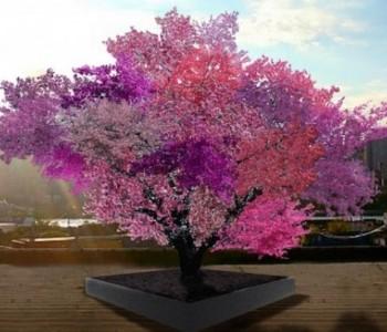 Stablo s 40 različitih vrsta plodova