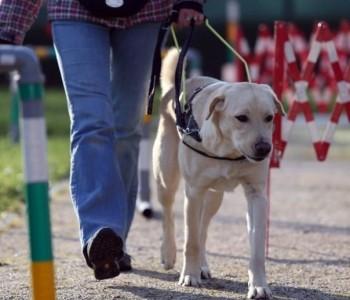 Slijepa kleknula poljubiti psa vodiča pa udarila glavom u stolić i progledala!