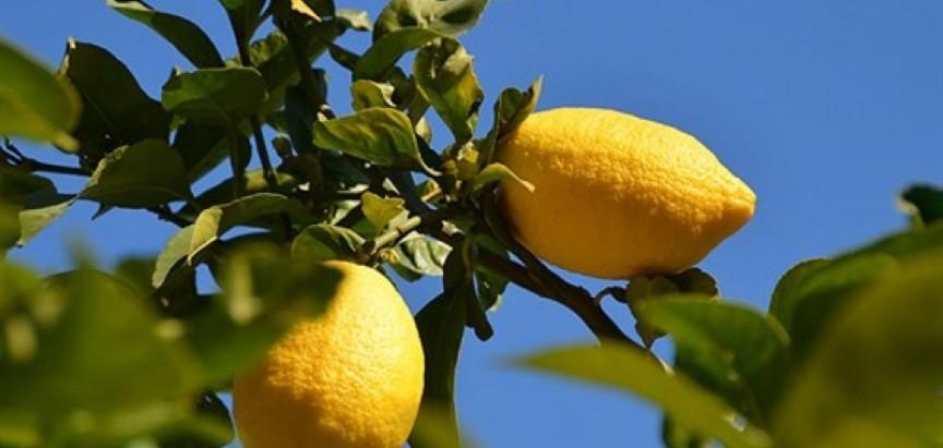 Mostarski trgovci kilogram limuna prodaju po 7 KM